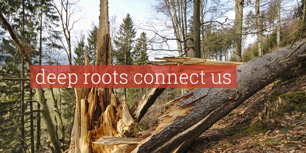 "Picture of a broken tree with a text overlay that says, ""Deep roots connect us."""